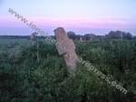 Cruce din cimitirul Sărăţeni